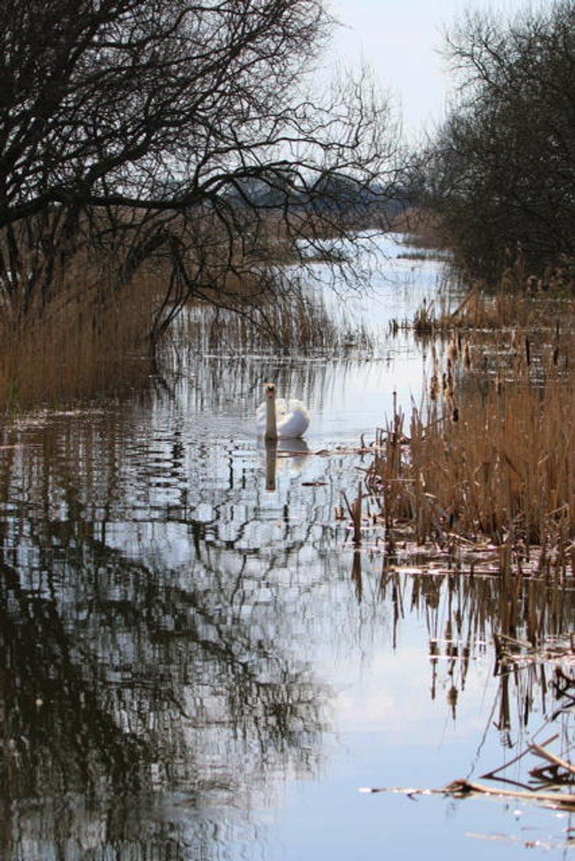 Swan Lake! by chris17