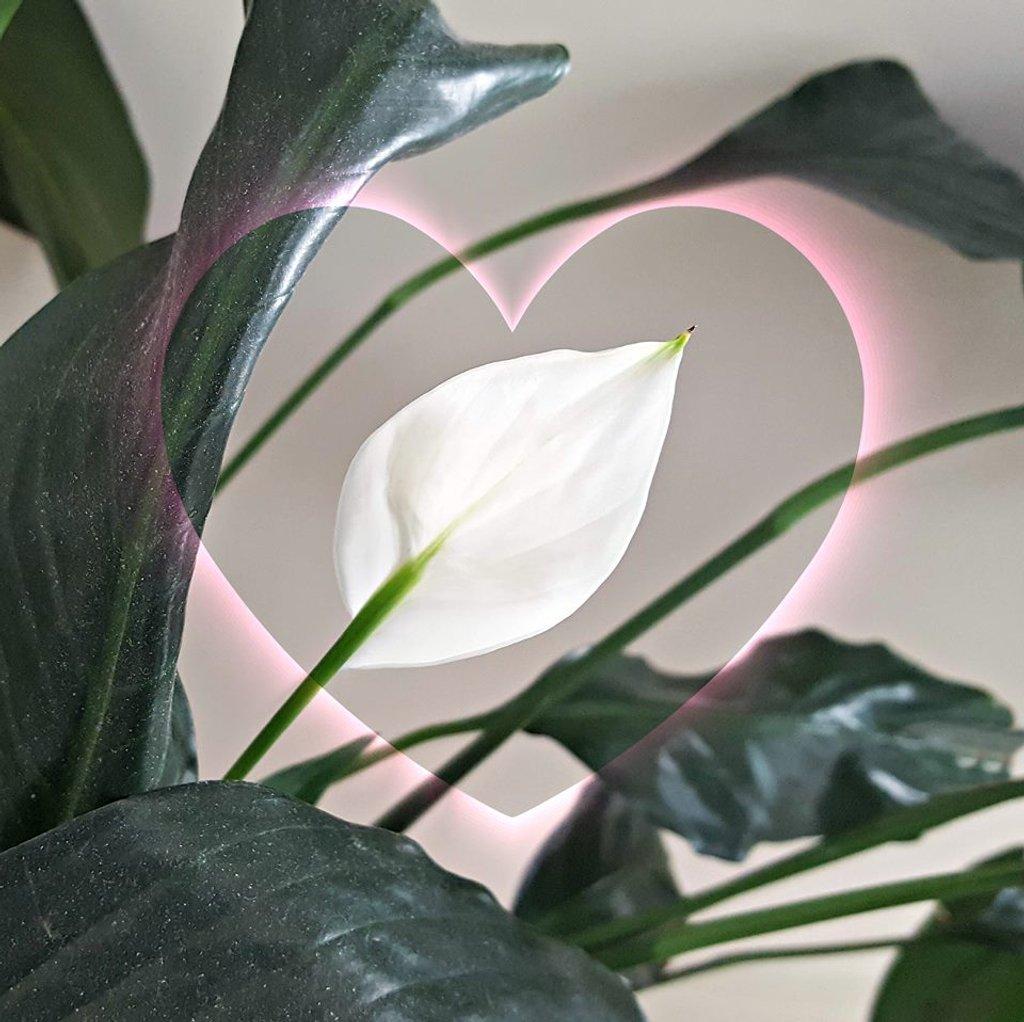 Mom's Flower by Swazzette