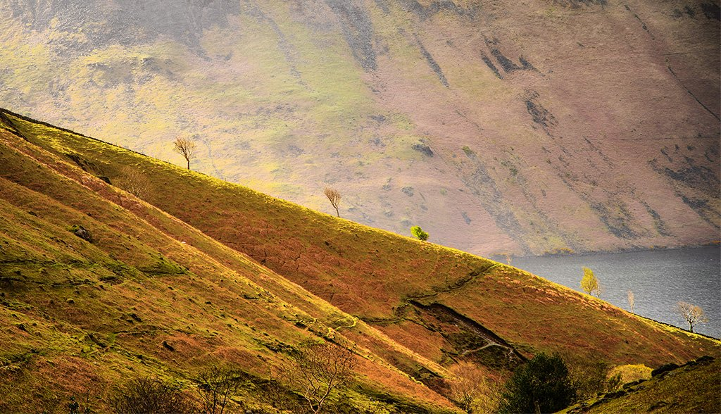 Yewbarrow trees by ellida