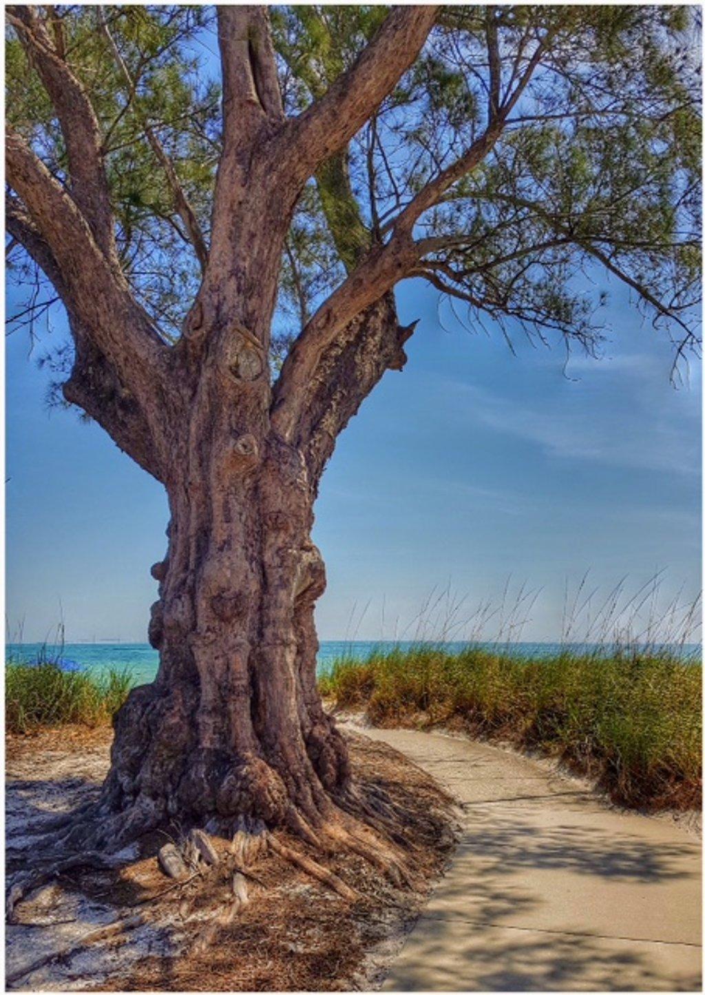 A tree! by lyndamcg
