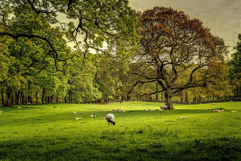 Trees and sheeps by ellida