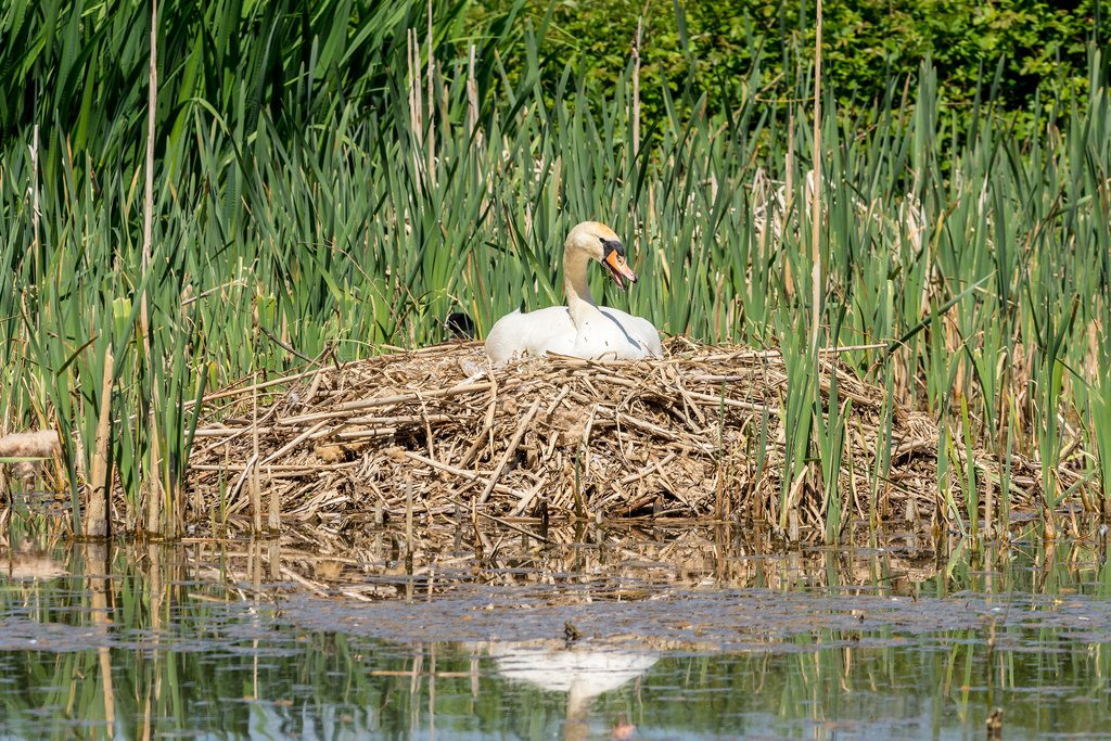 What a big nest you've got! by rjb71