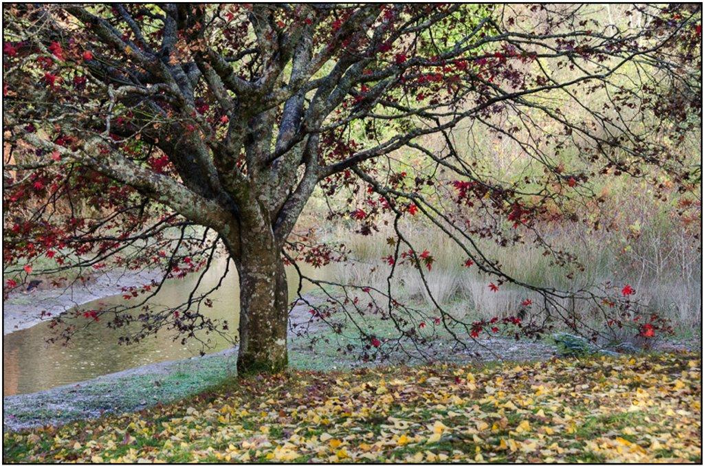 Tree, McLaren Falls Park by chikadnz
