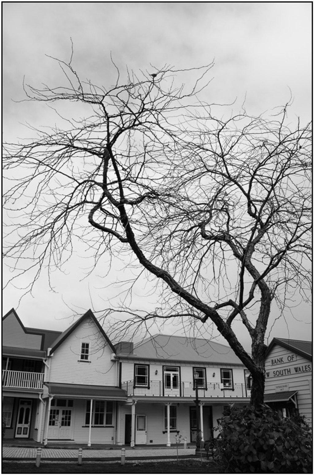 Tree, Historic Village by chikadnz