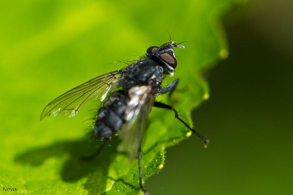 Fly by novab