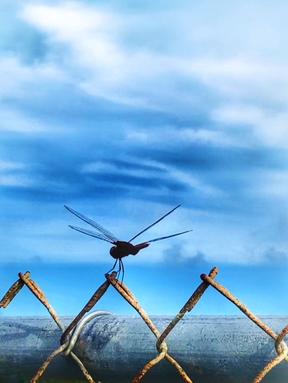 Safe landing by joemuli