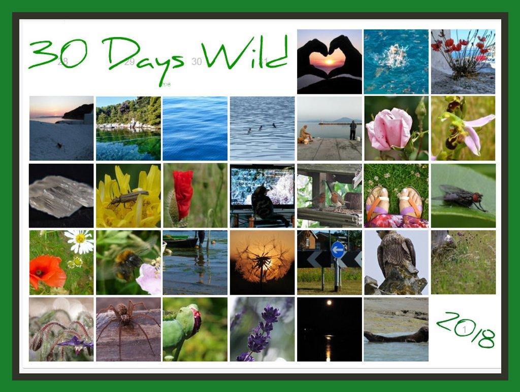 30 Days Wild of June by 30pics4jackiesdiamond