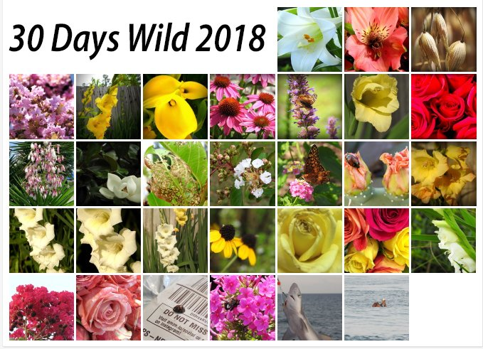 30 Days Wild 2018 by homeschoolmom