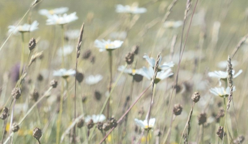 In the meadows at Calgory bay by helenhall