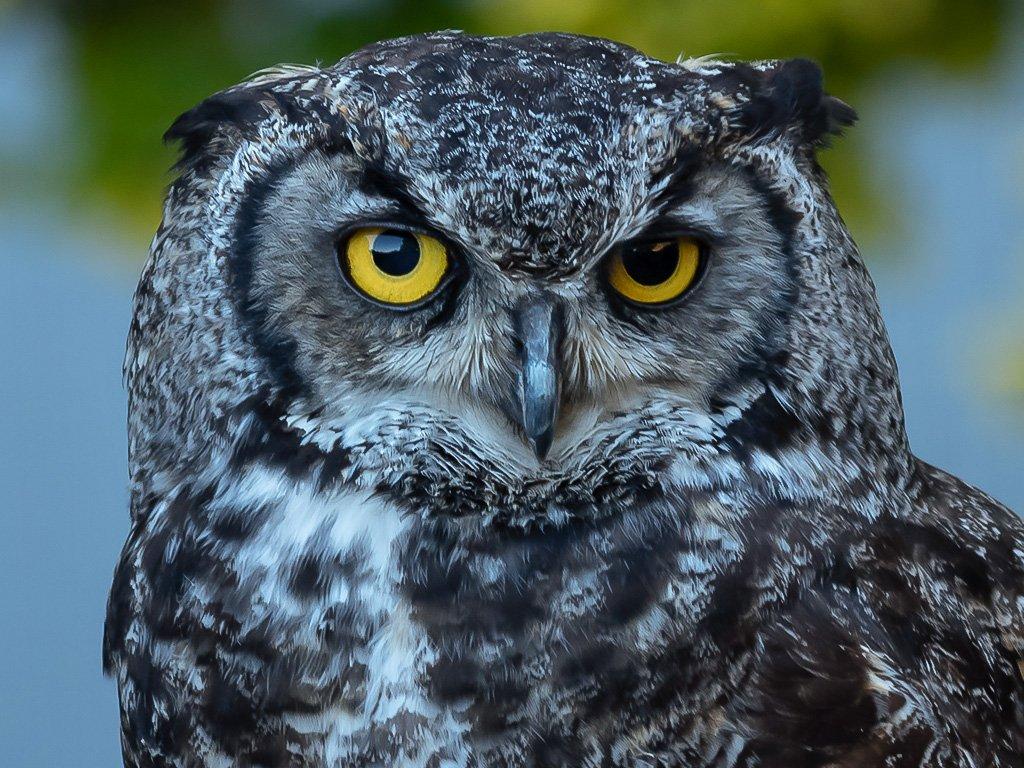Owl by ellida