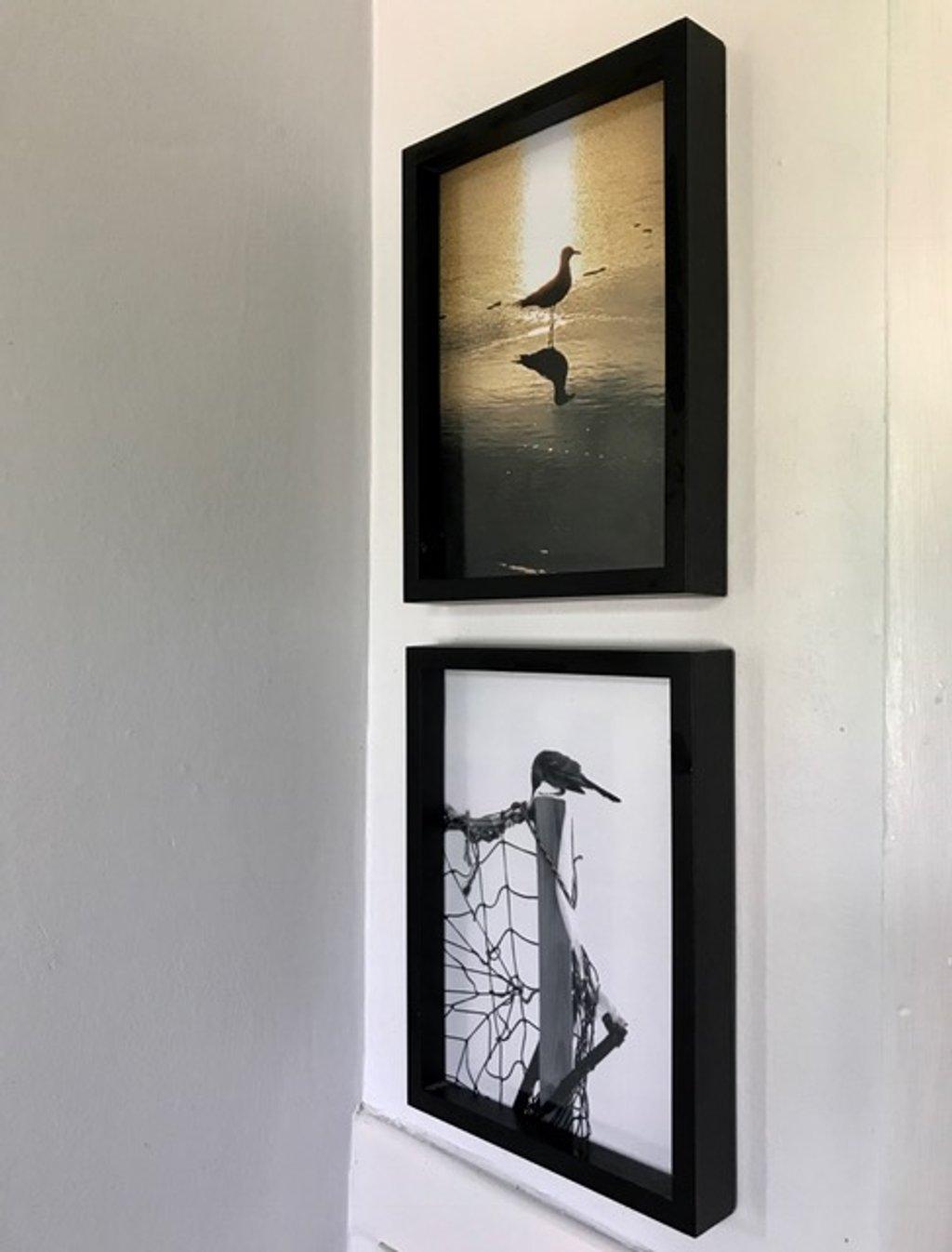Birds on the wall by joemuli