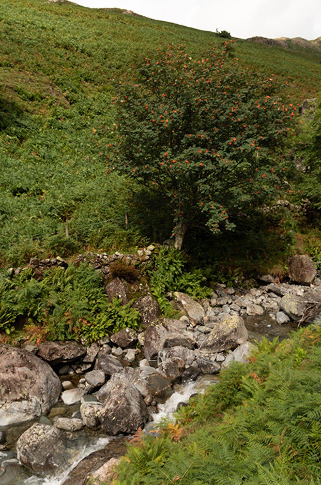 Rowan upstream by ellida