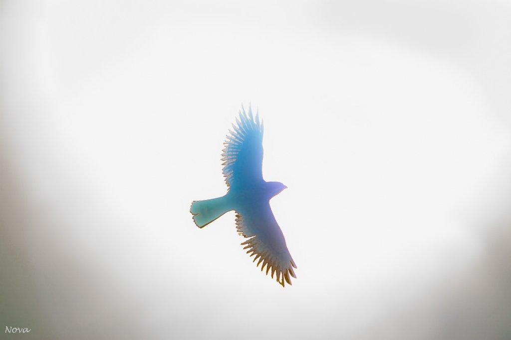 Flight by novab