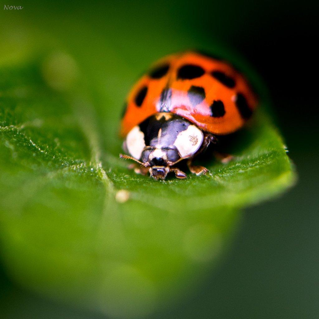 In my garden by novab