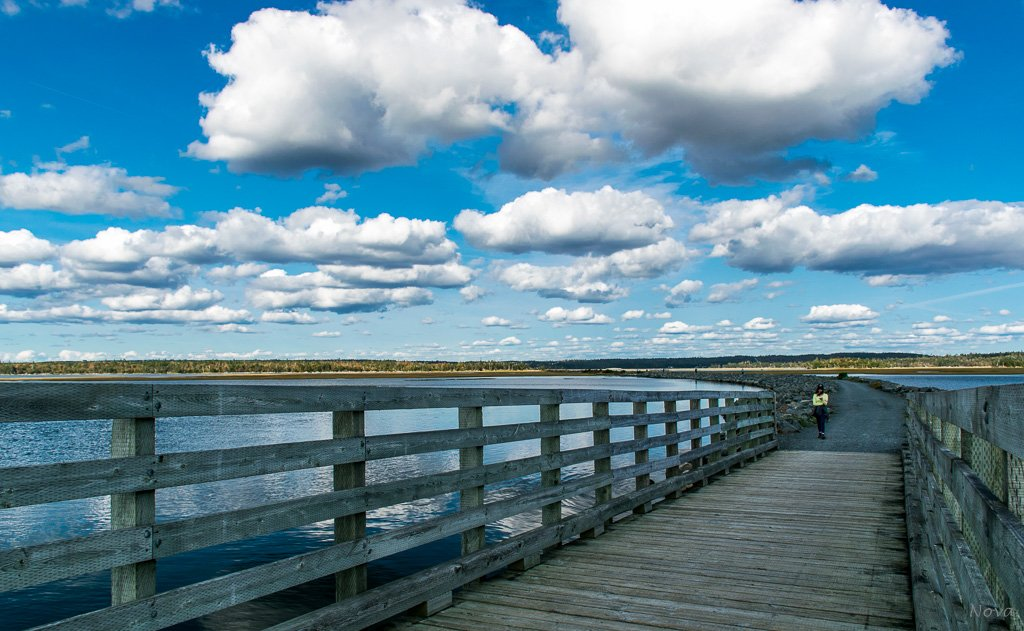The Salt Marsh Trail in colour - 4 by novab