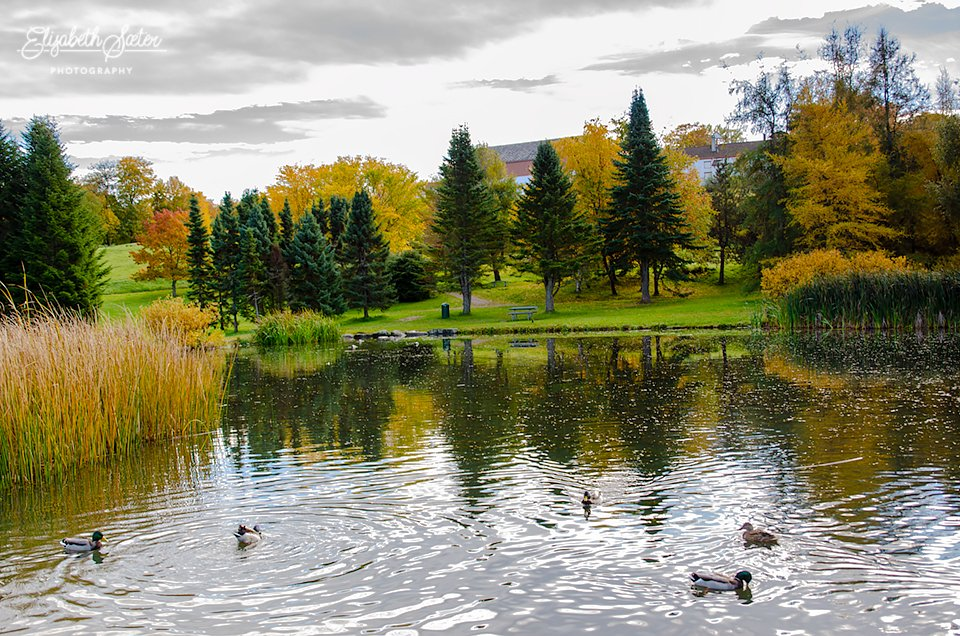 Duck pond by elisasaeter