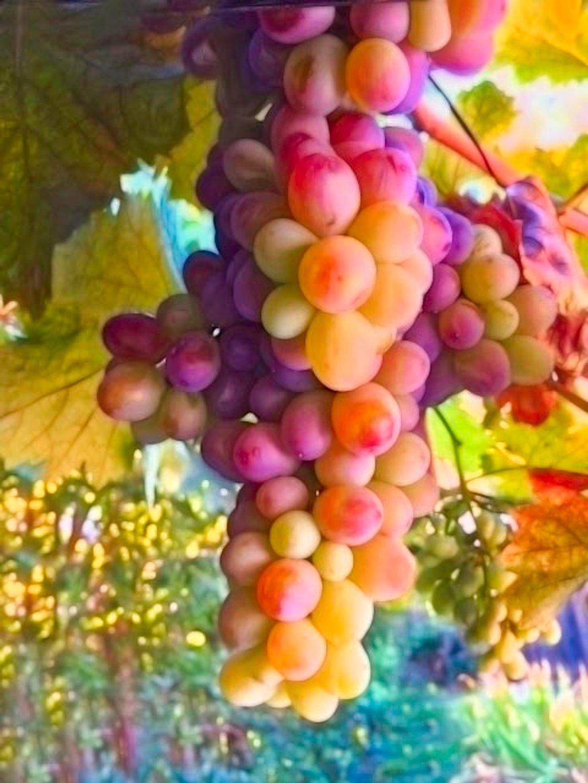 Colorful Vintage by joysfocus