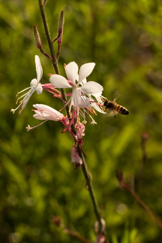 Flower and bee by kerenmcsweeney