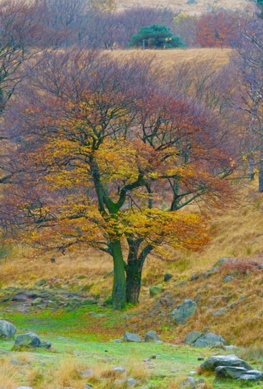 Autumn! by chris17