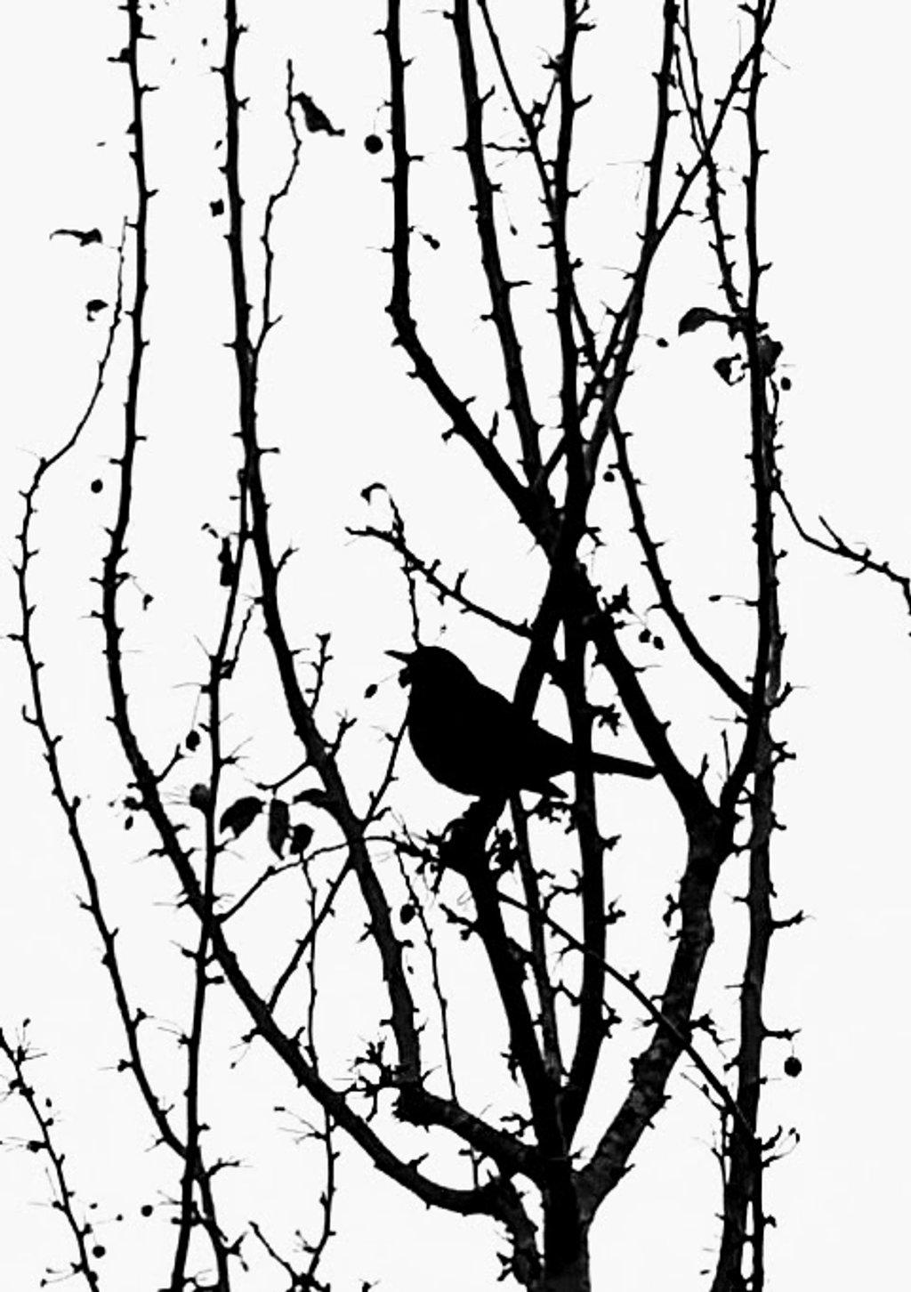Blackbird by 4rky
