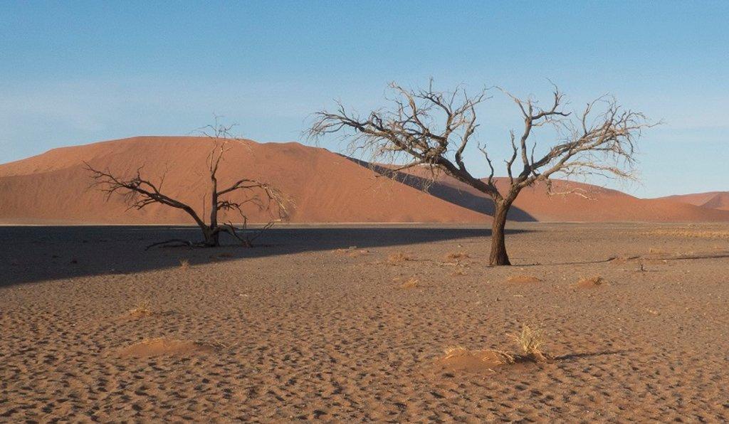 Desert Trees by helenhall