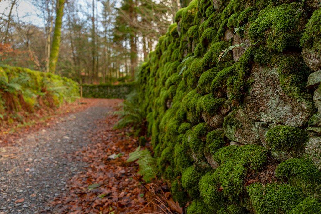 A damp and leafy lane by ellida