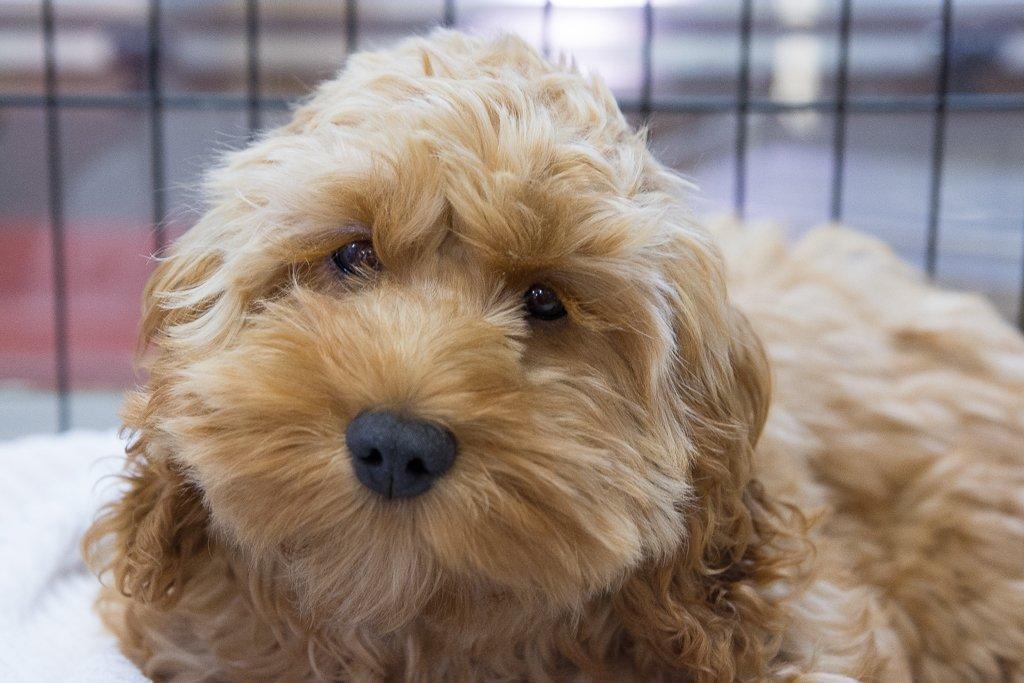puppyface by peta_m
