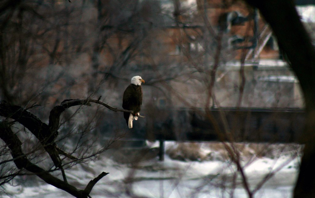 On watch over the Rock River by bigugly