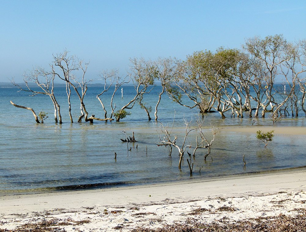 Mangroves 2 by onewing