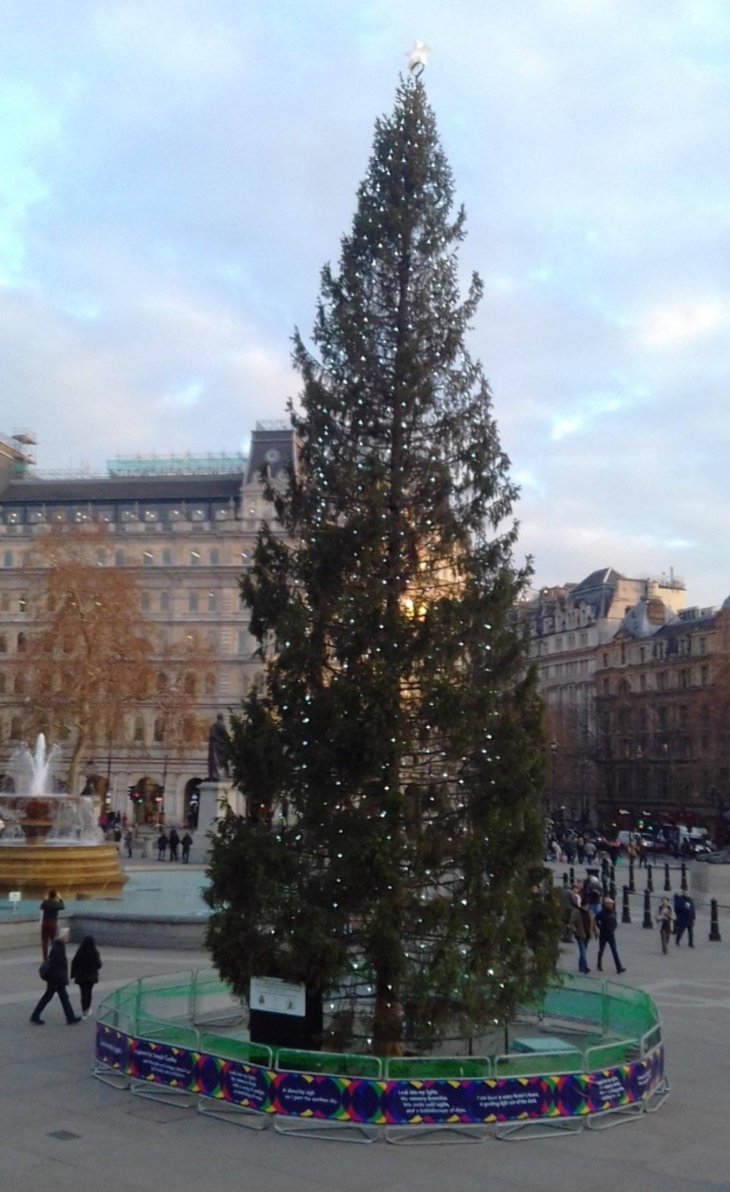 Tall Trafalgar Tree by will_wooderson