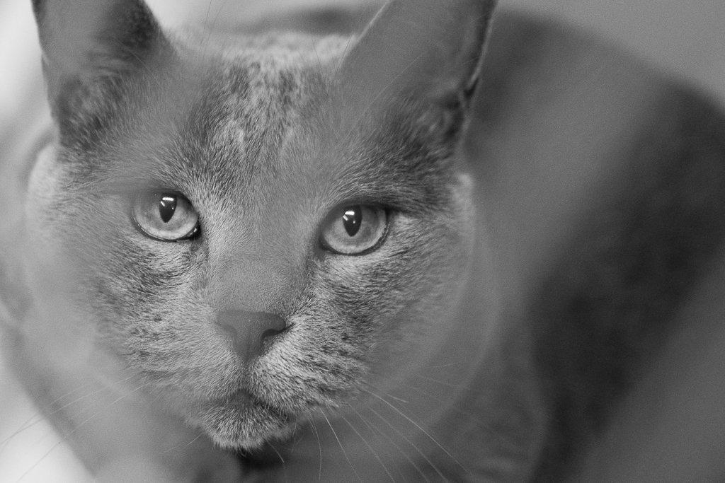 greycat eyes by peta_m