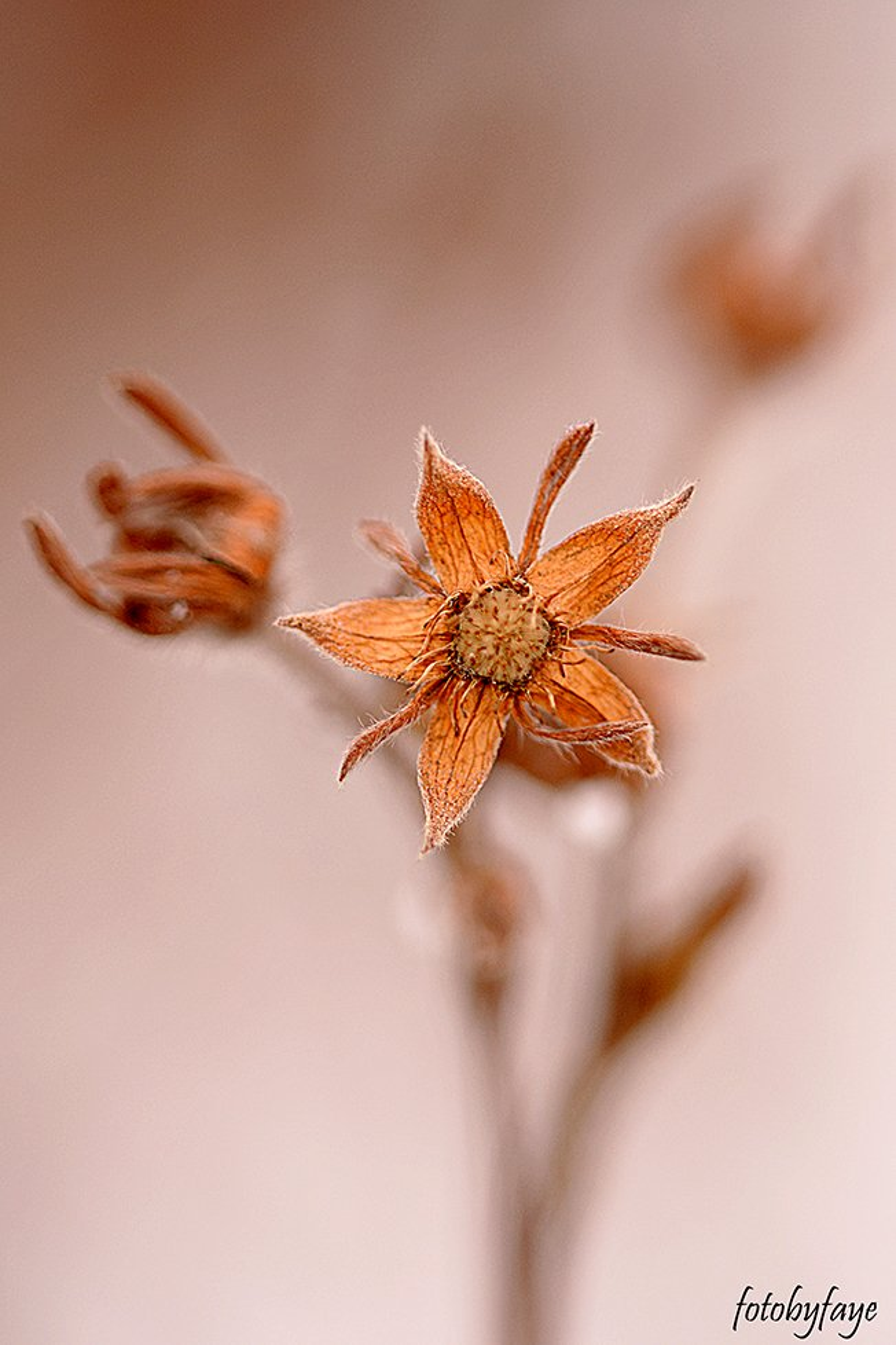 Little dried flower! by fayefaye