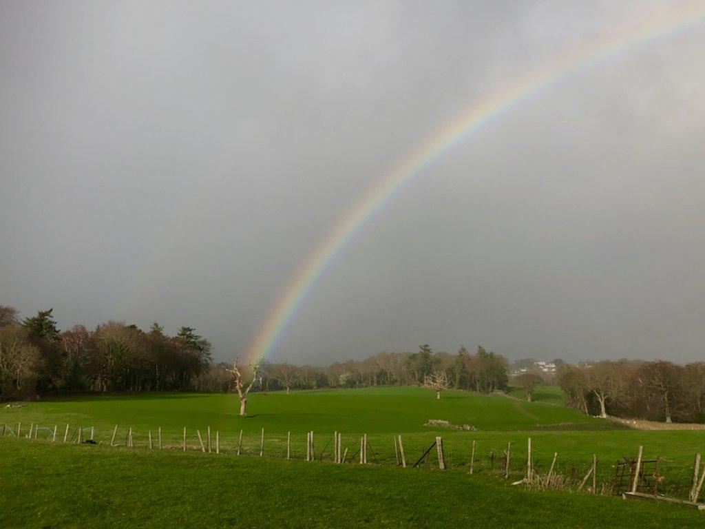 Rainbow  by dailydelight