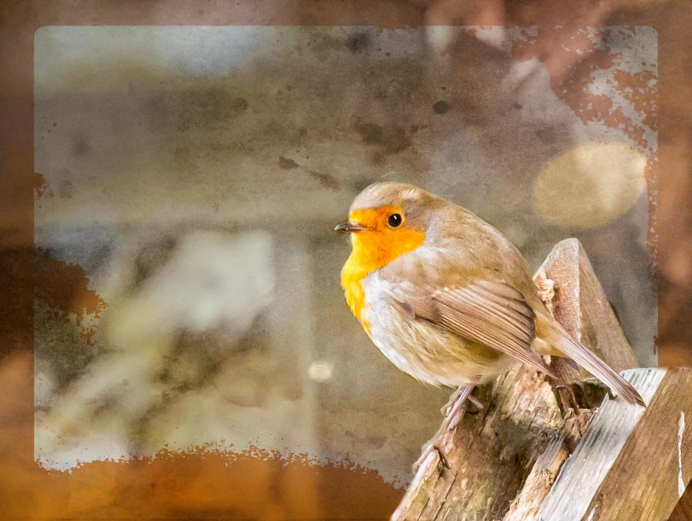 Robin through the window by pamknowler