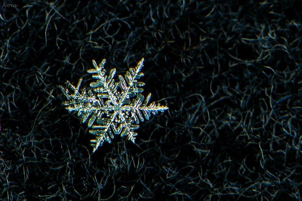 Morning snowflake  by novab