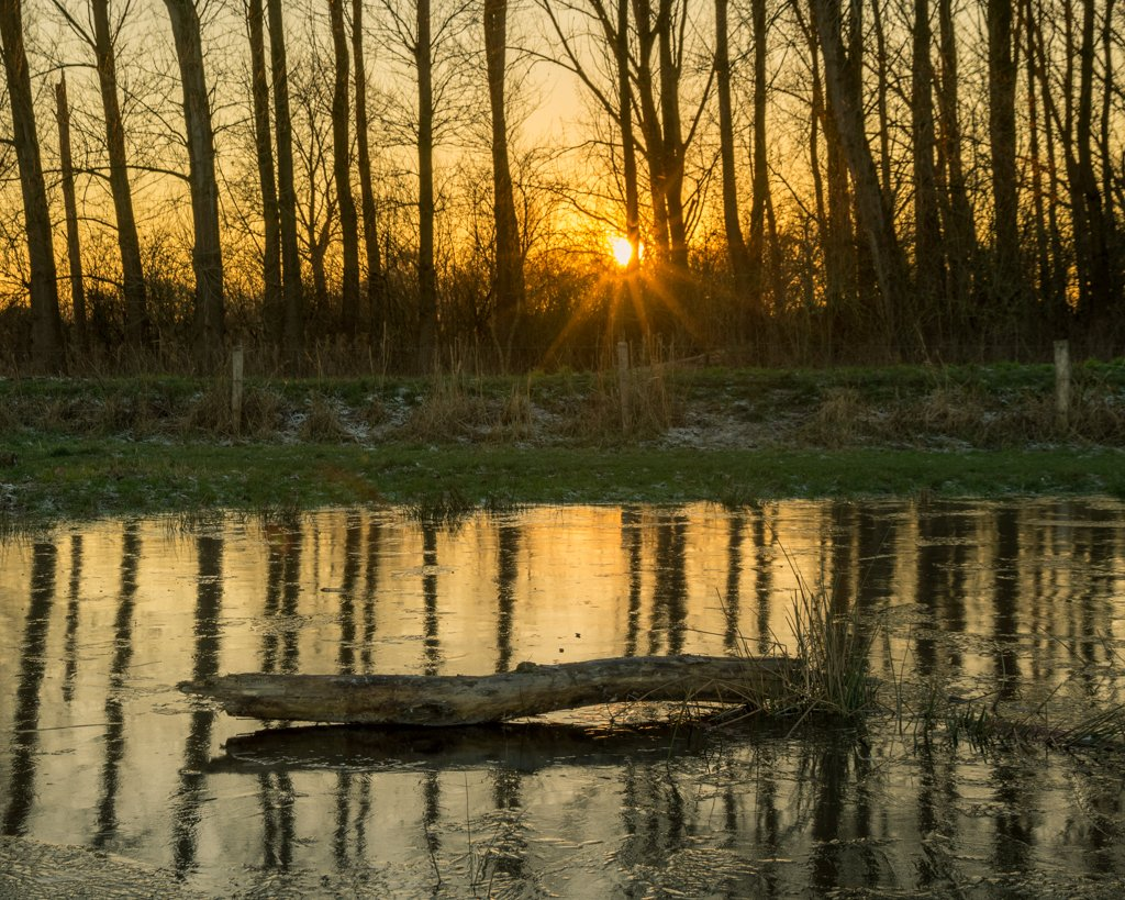 Sunset Tree Reflections by leonbuys83