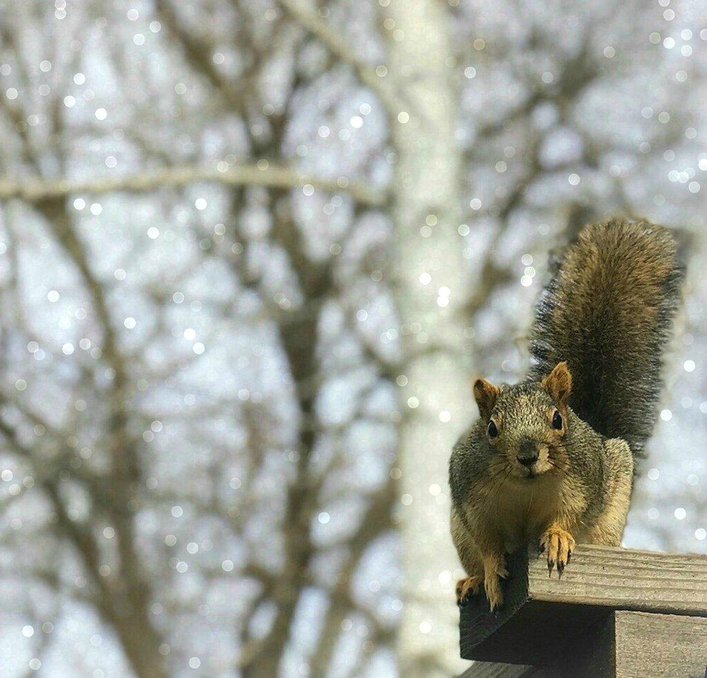 Said No Squirrel Ever by gardenfolk