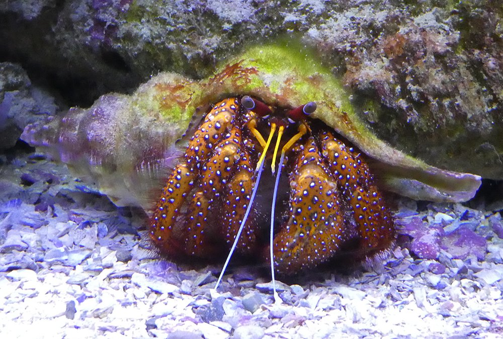 Hermit Crab by onewing