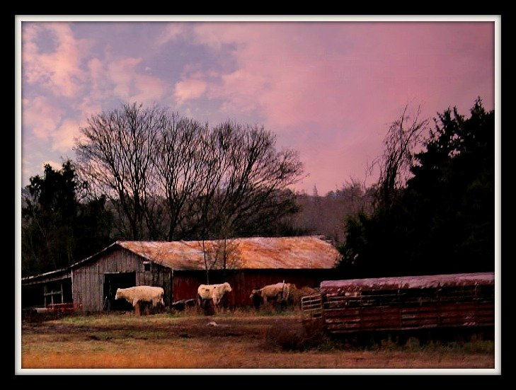 Where Low Fat Cows Stay in The Winter by moviegal1