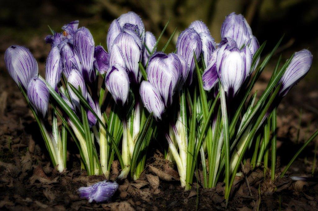 15-02 spring by tstb13