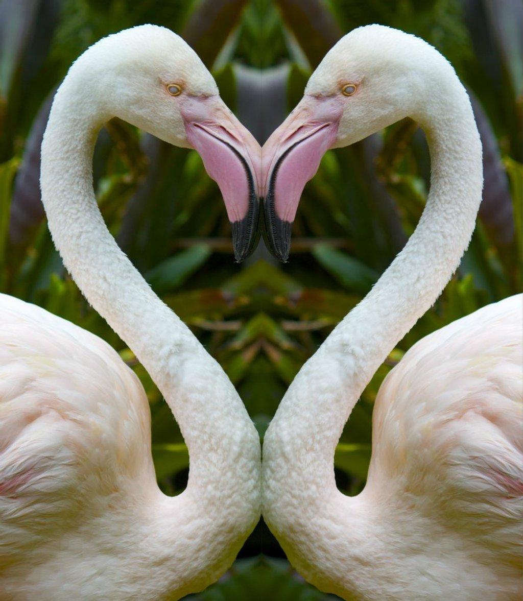 Flamingo heART by sugarmuser