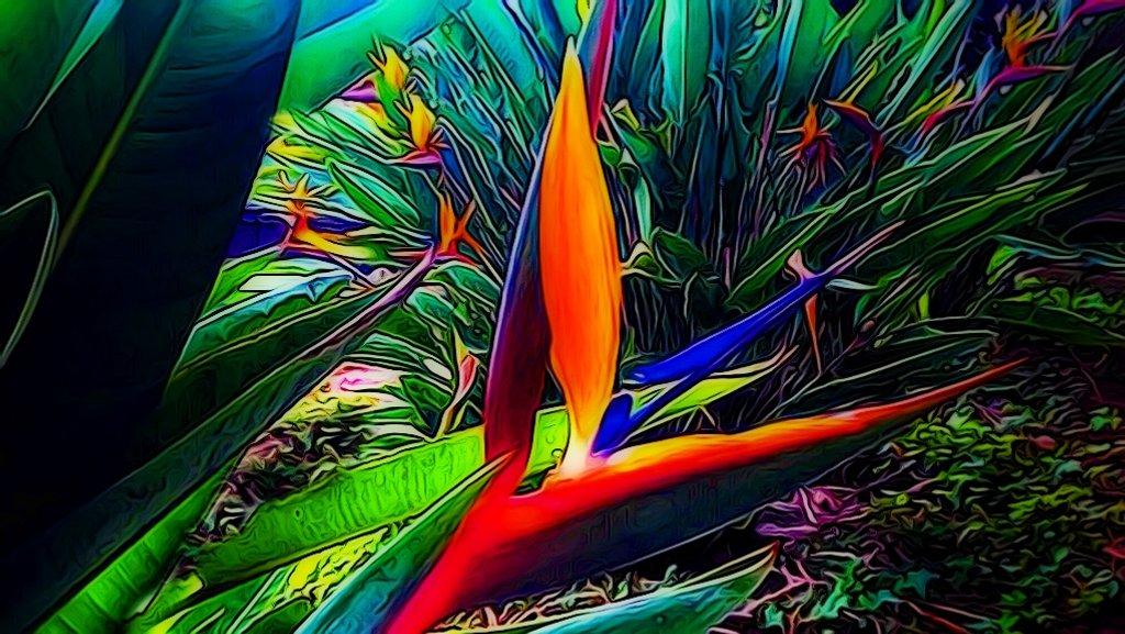 Bird of Paradise by joysfocus