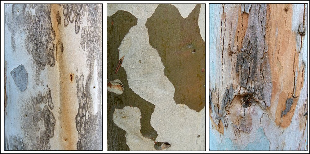 Tree Bark Triptych by onewing