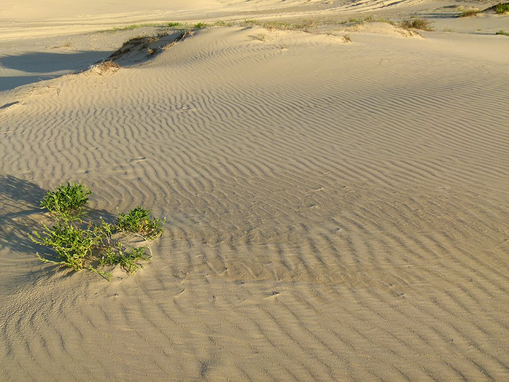 Ripples in the Sand by onewing