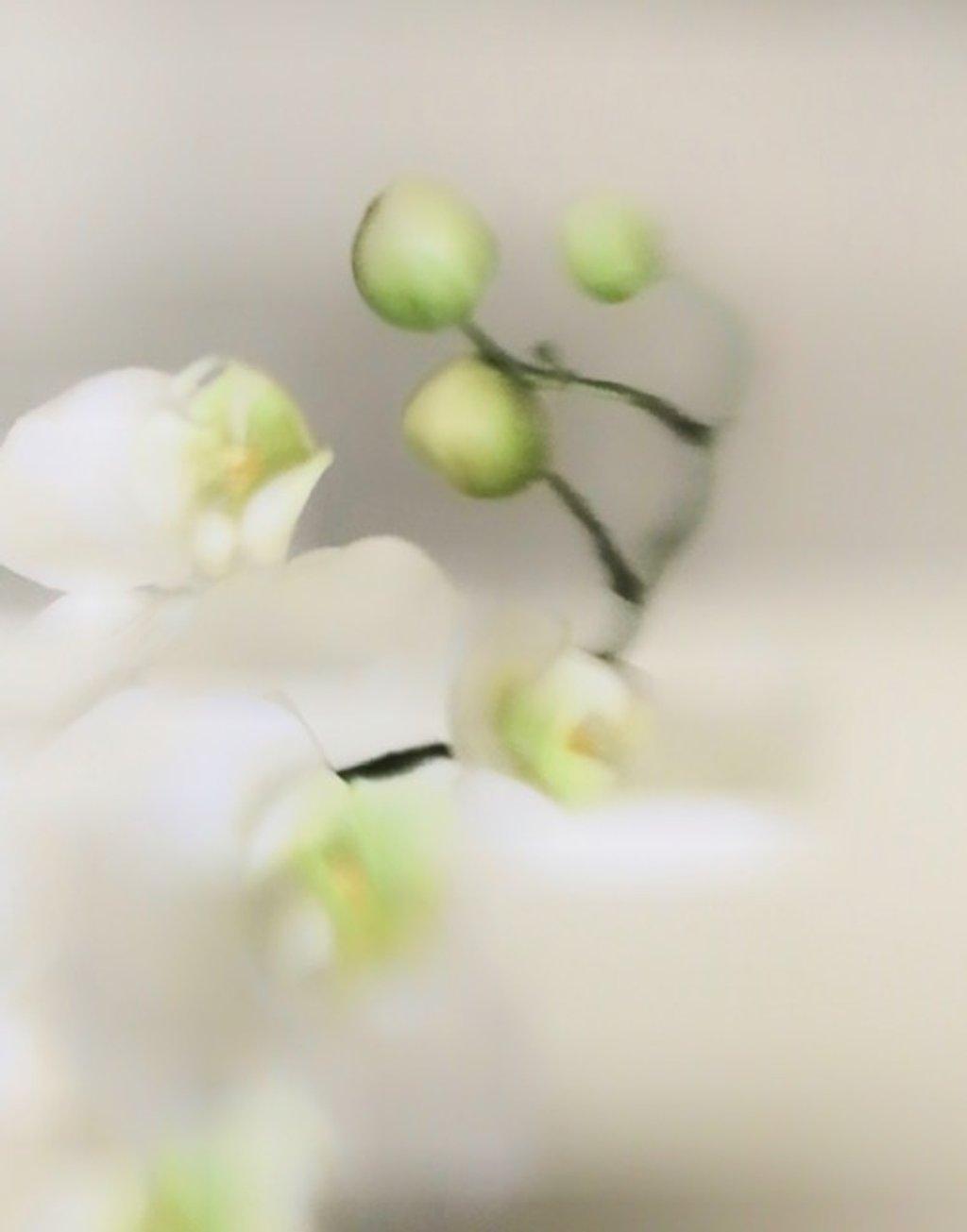 Orchid by joemuli