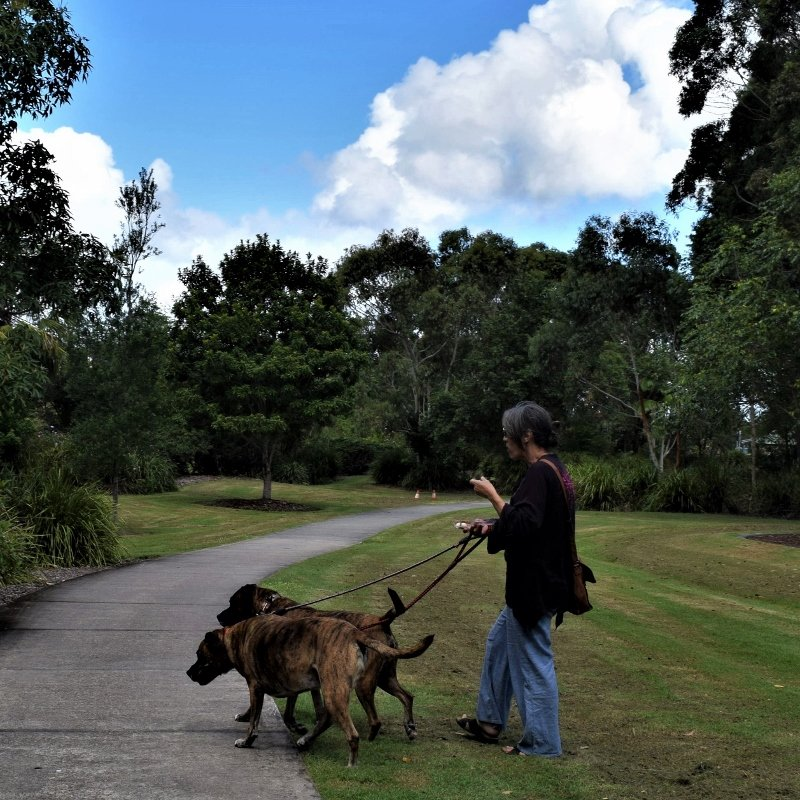 Two Large Dogs & A Mobile Phone ~      by happysnaps