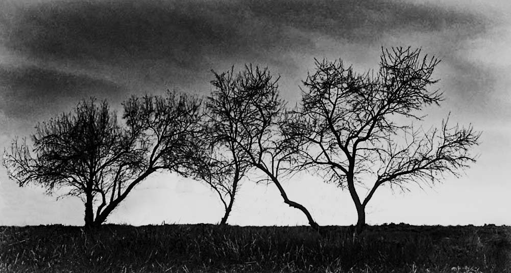 SilhouetteTrees by space319