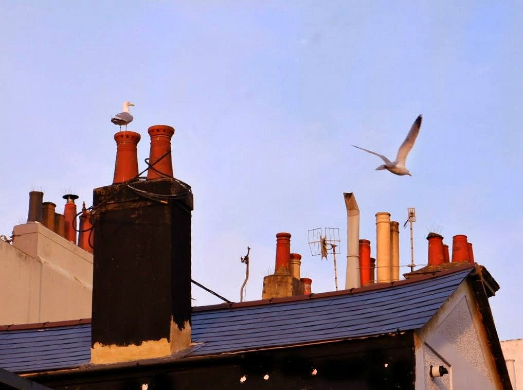 Rooftop and chimneypots  by 4rky