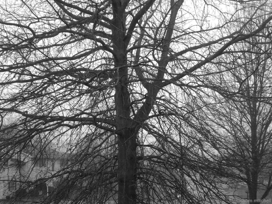 Trees in winter  by rhoing