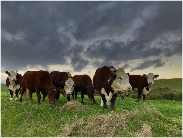 'The herd' by dide